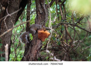 Squirrel in a tree eating a slice of pizza