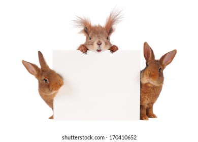 squirrel  and two rabbit with sheet for a text writing