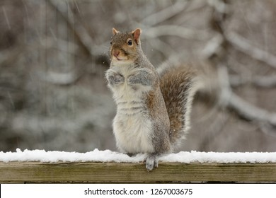 A squirrel wagging its tail in the snow