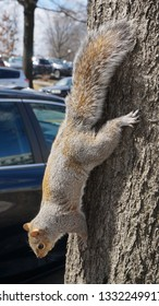 Squirrel in Washington, DC.