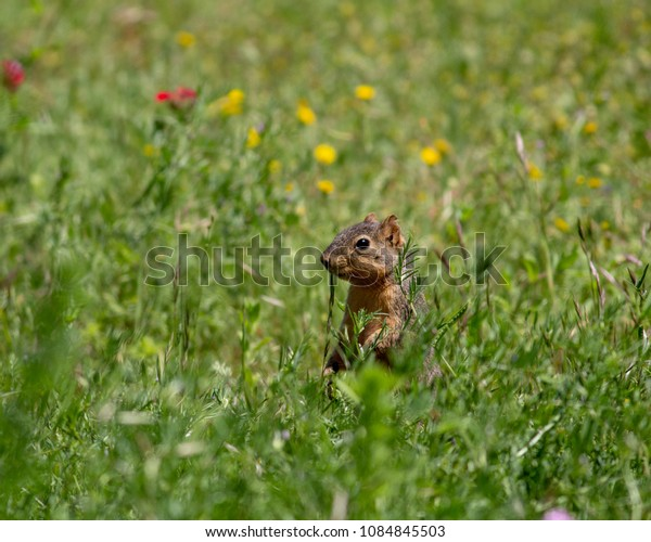 Squirrel and Wildflowers