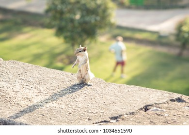 squirrel workout with man at the background, doing yoga at the Indian wall in one of the parks, summer time, funny creative concept shot