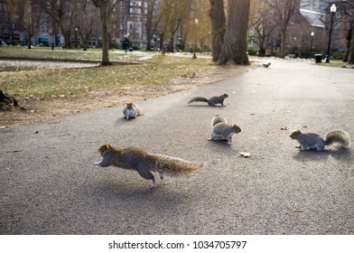 Squirrels in the Central Park, New York. Five squirrels in a street