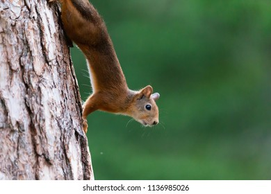 Squirrels climb trees