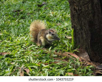 Squirrels eat fruit on the grass in the park.