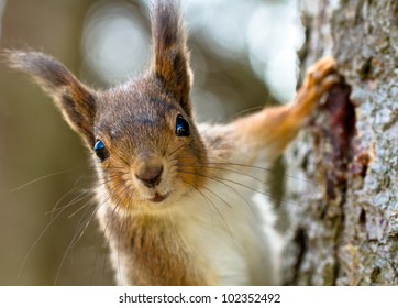 Squirrel's portrait on the tree