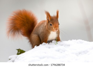 Squirrels Rodents Ginger color Snow Bokeh Animals photo