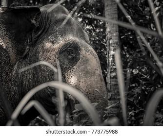 Sri Lanka, Africa