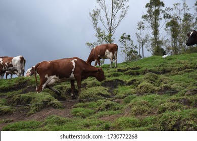 Sri lanka Ambewela farm with nature