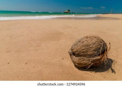 Sri Lanka. Beautiful Tropical Beach. Cocunut on a tropical beach. Hikkaduwa. Ambalangoda.