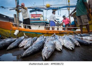 Sri Lanka fish market