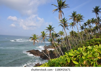 Sri lanka nature with palm trees and the ocean