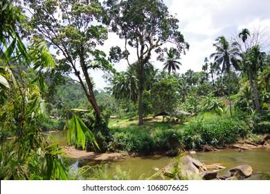 Sri Lanka. Sinharaja. The center of the island. Mountain stream in the rainforest at dawn. Stunningly beautiful scenery.