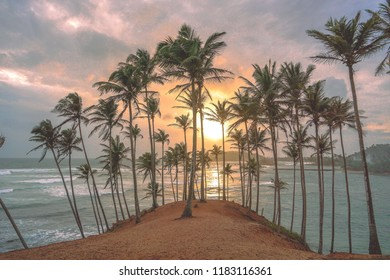Sri Lanka Sunset at Mirissa Palm Tree Grove