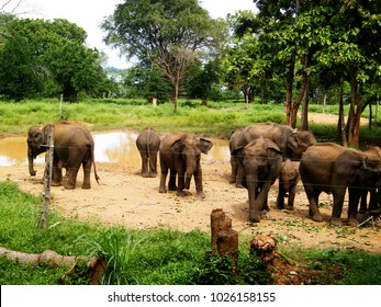 """Sri Lankan elephant refugee camp. """"Udawalawe"""" Transit Home is a refuge for baby elephants, the majority which have been affected by the tragic incidents."""