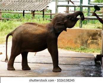 "Sri Lankan elephant refugee camp. ""Udawalawe"" Transit Home is a refuge for baby elephants, the majority which have been affected by the tragic incidents."