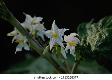 Sri Lankan Wildflower wildlife beautiful   nature whiteflower