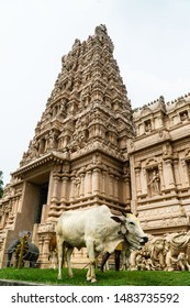 Sri Shakti Devasthanam Temple in Selangor, Malaysia. It is one of the most beautiful hindu temples in Malaysia. A sacred cow with traditional paint wanders in front of the temple