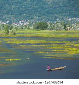 Srinagar, India - June 15, 2017: Man riding a shikara boat on the Dal lake in Srinagar, Kashmir, India.