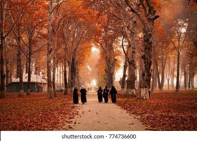 Srinagar, Jammu and Kashmir, India - November 15, 2015 : Burka clad Kashmiri women walking on pathway, also seen fallen leaves spread all over Kashmir University Campus in Srinagar.