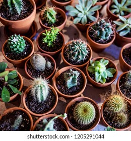 Ssucculents and various  cactus in different pots.  Set of house indoor plants. Succulent Pettern. Flat lay