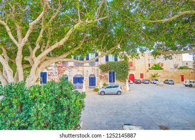The St Agatha Square with scenic edifices and the sprawling tree, Mdina fortress, Malta