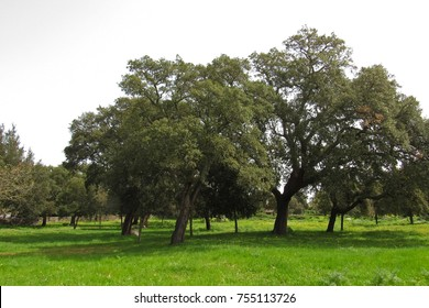 St. Augustine's park, oak forest in Sardinia (Italy)