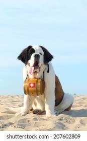 St. Bernard dog as rescue animal with barrel