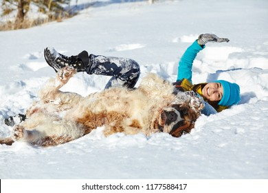 St. Bernard dog with woman owner playing in snow in the winter outdoors