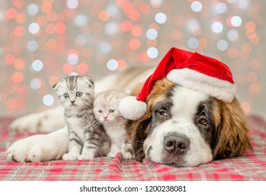 St. Bernard puppy in Christmas hat and two kittens together