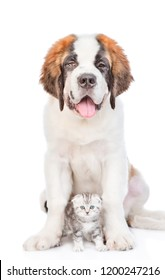 St. Bernard puppy sitting with a kitten. isolated on white background