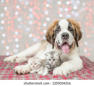 St. Bernard puppy with two kittens together