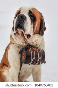 St. Bernard rescue dog with iconic barrel.
