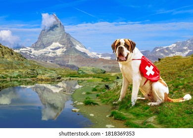 St. Bernard rescue dog standing in Zermatt, Canton of Valais, Switzerland, with Mount Matterhorn or Monte Cervino or Mont Cervin reflects on Riffelsee Lake.