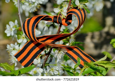 St. George ribbon on a blossoming apple tree. Spring of Victory. Victorious may. Closeup. May 9 - Victory Day