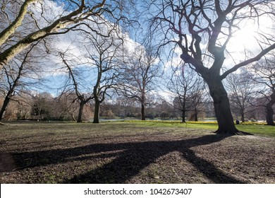 St James Park, London in spring time, showing trees and their reflection in the grass