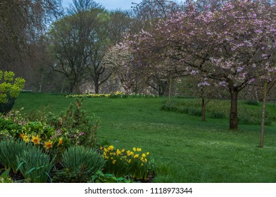 St James Park in spring. Trees in blossom, yellow daffodils, neat grass