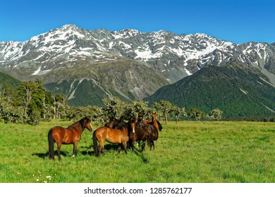 St James Wild horses, St James Station, St James Walkway and conservation area, Lewis Pass, New Zealand.