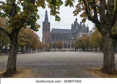St John's Cathedral with chestnut trees in autumn colors. 's-Hertogenbosch, Netherlands