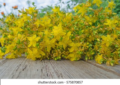 St. John's wort  dried on a wooden table. Medicinal plant. Hypericum perforatum