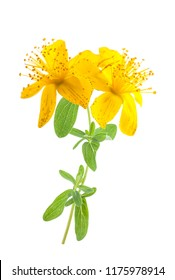 St. John's wort flowers  isolated  on white background