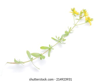 St. John's wort flowers on a white background