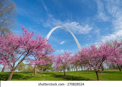 St. Louis Gateway Arch in Missouri with pink flower and blue sky