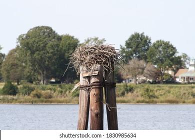 St. Mary's City, Maryland, USA - October 9, 2020: Osprey Nest