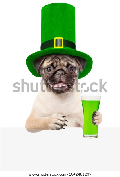 St. Patricks Day. Funny puppy with a glass of green beer above white banner. isolated on white background