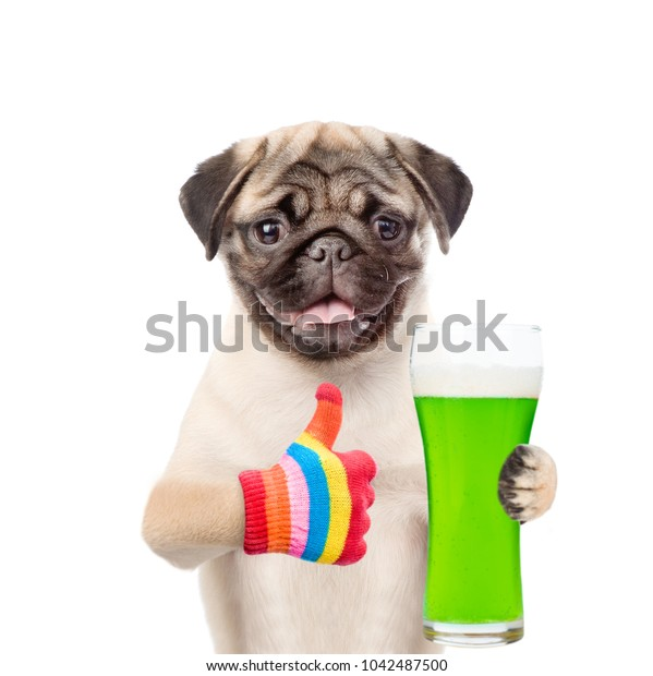 St. Patricks Day. Funny puppy with a glass of green beer showing thumbs up. isolated on white background.