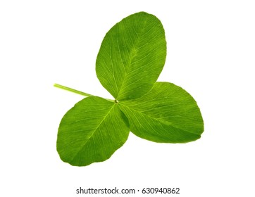 St. Patrick's Day symbol. Green clover leaf isolated on white background.