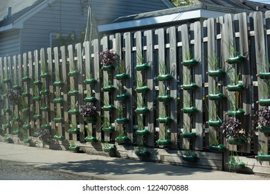 ST PAUL, MINNESOTA - OCTOBER 26, 2015: Array of large plastic soda bottles made into planters mounted on fence with plants growing in them.