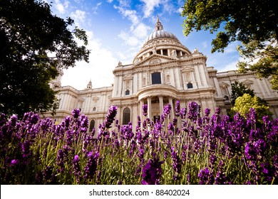 St Paul's Cathedral, London in the springtime, with beautiful lavender bushes in the foreground. Daytime. Landscape orientation.