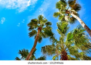 St. Pete Beach, Florida. January 25, 2019.  Top view of palm trees on lightblue sky background in St. Pete Beach.